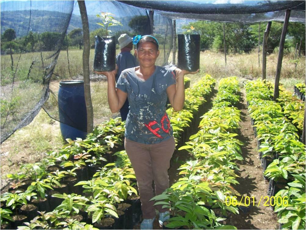 Vivero en Producción de Plantas frutales y maderables
